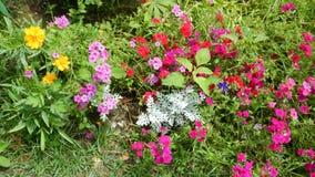 Technicolorbloemen in Shalimar tuin-2 Royalty-vrije Stock Fotografie