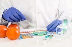 Technik pracuje z genetycznie zmodyfikowanymi warzywami GMO karmowy badanie w lab pojęciu Zdjęcia Royalty Free