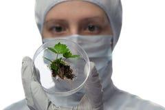 Technik trzyma próbnej tubki z rośliną i ziemią Zdjęcie Royalty Free