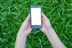 Technologia i natura Ręki trzyma telefon komórkowego z białym pustym ekranem nad tłem trawy komórki telefonu komórkowego mądrze s obrazy stock