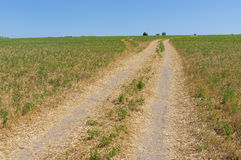 Technological dirt road in a field Stock Photos