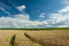 Traces of wheels in cereals, green meadow and clouds in the sky. Technological path through a cereal field, green corn, horizon and clouds on a blue sky stock image