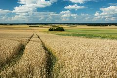 Wheel tracks in the field, horizon and clouds in the sky. Technological path through a grain field, horizon and clouds on a blue sky stock images