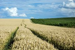 Technological path to the field. Wheel tracks through a field, horizon and clouds in the blue sky royalty free stock image