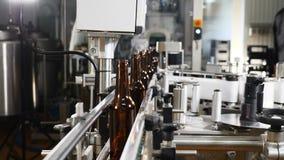 Technologiczna linia w browarze Puste szklane butelki na konwejerze odtransportowywa Technologiczny proces piwo zbiory wideo