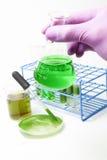 Technologie de combustible organique d'algues Photo libre de droits