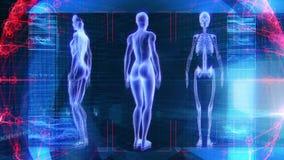 Technologie femelle humaine de la Science de biologie d'animation de l'anatomie 3D banque de vidéos
