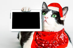 Technology christmas Cat Royalty Free Stock Photography