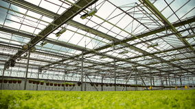 The technology of growing plants in greenhouses industrial stock footage