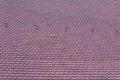 Techumbre-tejas rojas Foto de archivo