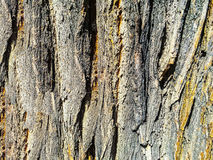 Tecido de madeira, textura imagens de stock