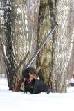Teckel et fusil de chasse noirs près de l'arbre de bouleau dans la forêt d'hiver Image stock