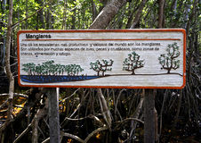 Tecken på en skyddad mangroveskog Arkivbilder