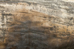 teckent trä Arkivbilder