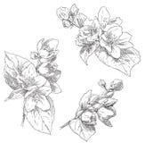 tecknad blommahand Royaltyfria Bilder
