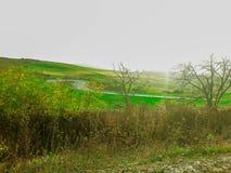 tecknad film fields grön illustrationstil royaltyfria foton