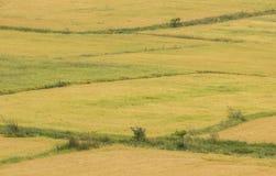tecknad film fields grön illustrationstil Arkivbilder