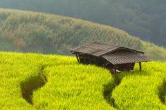 tecknad film fields grön illustrationstil Royaltyfri Fotografi