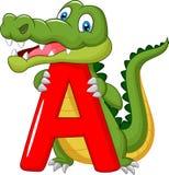 Tecknad filmalligator med alfabet A Royaltyfri Bild