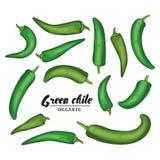 Tecknad filmchilepeppar Mogen grön grönsak Läcker vegetarian Arkivbild