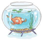 Tecknad filmguldfisk i en fishbowl Arkivfoto