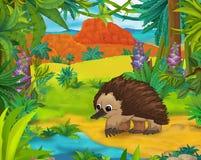 Tecknad filmplats - lösa Amerika djur - karikatyr - echidna Royaltyfria Bilder