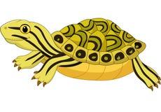 Tecknad filmsköldpadda som isoleras på vit bakgrund Royaltyfria Bilder