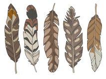 Tecknad filmstilillustrationen ställde in av olika naturliga bruna örn-, and- och vadarefågelfjädrar vektor illustrationer