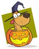 tecknad filmteckenhund halloween Fotografering för Bildbyråer