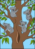 tecknad hand isolerad vektorwhite för djur tecknad film Fyra som den lilla gulliga koalan behandla som ett barn, sitter på trädet Royaltyfri Foto