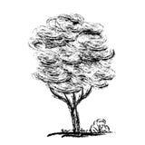 tecknad handtree Blyertspennan skissar i svartvitt Arkivbild