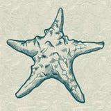 tecknad tappning för stil för stjärna för hav för handillustration originell Original- hand dragen illustration in Arkivfoto