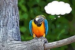 Tecknade filmen för ararauna för blått- och gulingaramunkhättor Royaltyfri Fotografi