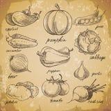 tecknade handgrönsaker Royaltyfri Bild