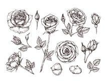 tecknade handro Skissa steg blommor med taggar och sidor Svartvitt isolerat botaniskt för tappningetsningvektor stock illustrationer