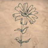 tecknande blomma vektor illustrationer