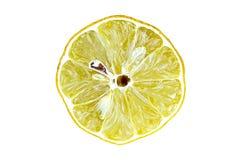 Teckning av en citron Arkivfoto