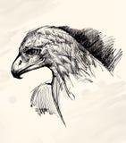 Teckning för Eagle huvudfärgpulver Arkivbilder