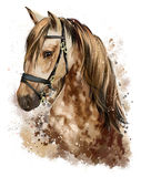 Teckning för hästhuvud arkivbild