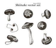 Teckning för hand för Shiitakevektoruppsättning vektor illustrationer