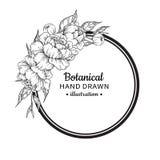 Teckning för ram för blommatappningvektor Pion, ros, sidor och ber stock illustrationer