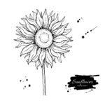 Teckning för solrosblommavektor Hand dragen illustration som isoleras på vit bakgrund stock illustrationer