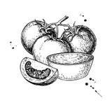 Teckning för tomatsås Vektor isolerad illustration med bunkeful vektor illustrationer