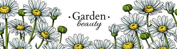 Teckning för tusenskönablommabaner Dragen blom- gräns för vektor hand Kamomill stock illustrationer