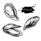 Teckning för uppsättning för vektortappningmussla Hand dragen monokrom skaldjur vektor illustrationer