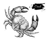 Teckning för vektortappningkrabba Hand dragen monokrom havs- illus vektor illustrationer