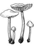 Teckning gravyr, champinjon Royaltyfri Illustrationer