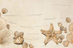 Teckningar av skal och med sjöstjärnan, garnering av snäckskal från stranden Arkivfoto