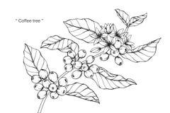 Teckningen för kaffeträdet och skissar Arkivbild