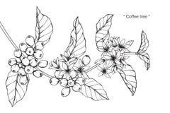 Teckningen för kaffeträdet och skissar Royaltyfri Fotografi